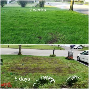 long island lawn repair