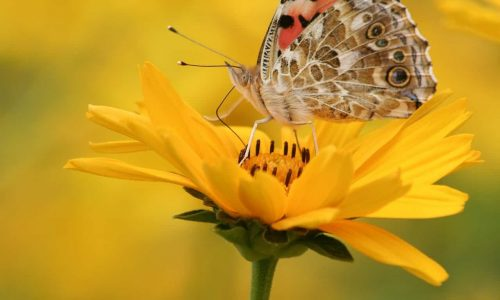 close-up-butterfly-plant-3977927_1920